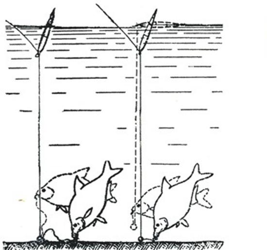 ловля леща на живодер